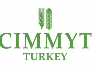 CIMMYT International Maize and Wheat Improvement Center